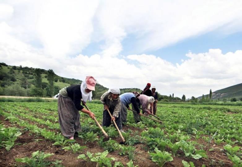 Başta tarım ürünleri olmak üzere Türkiye'de yeterince üretilebilecek malların, lüks tüketim maddelerinin ve ikame edilebilen malların dışalımına son verilecek, yerli üretimin verim ve kalitesinin artırılması için tarım ve sanayi üreticisi desteklenecektir.